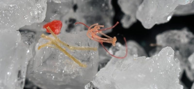 Minden szervünkben lehet már mikroműanyag