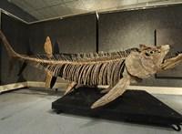70 millió éves, 6 méter hosszú óriáshal maradványai kerültek elő