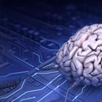 Testi jelét találták az intelligenciának
