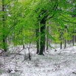Nézegessen képeket a májusi hóesésről