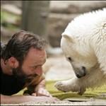 Agyvelőgyulladás és vírusfertőzés miatt pusztult el Knut